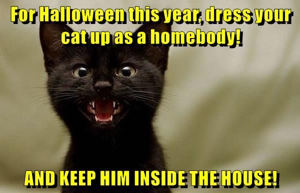 keep cat inside house halloween dress - 8982094848