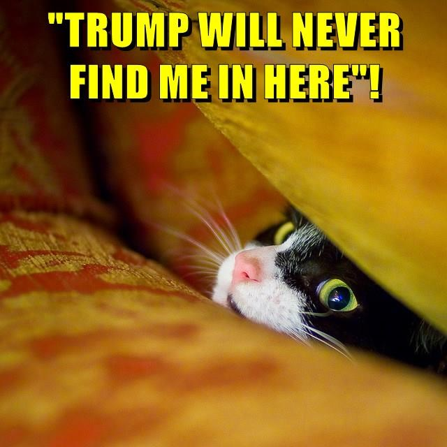 """TRUMP WILL NEVER FIND ME IN HERE""!"