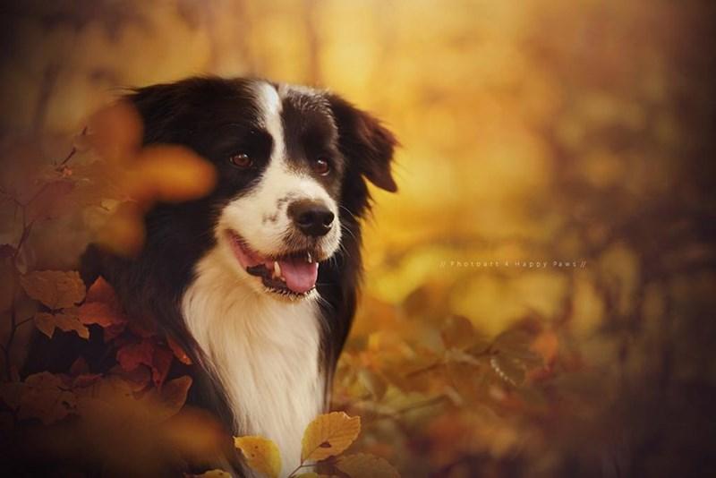 Dog - Photoart 4 Happy Paws /