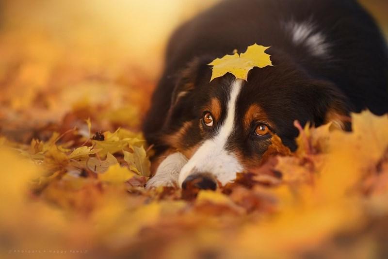 Dog - Photoart 4 Happy Paws