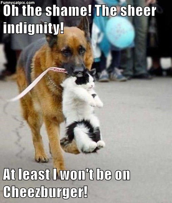 indignity cheezburger at least cat wont - 8982310912