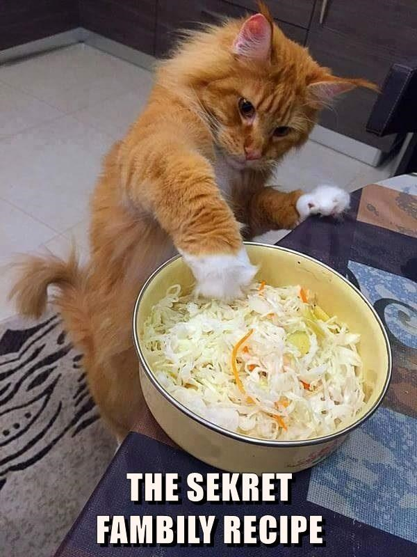 cat secret recipe family caption - 8982411520