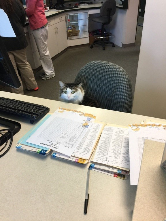 what a pawsitively adorable receptionist