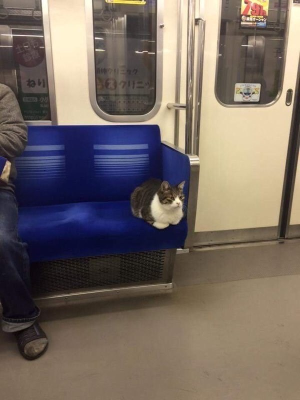 she took the midnight train going anywhere