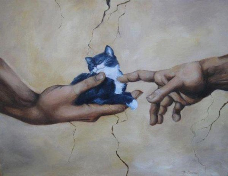 the creation of kitty