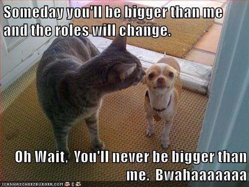 cat,dogs,Someday,never,roles,bigger on the inside,change,caption