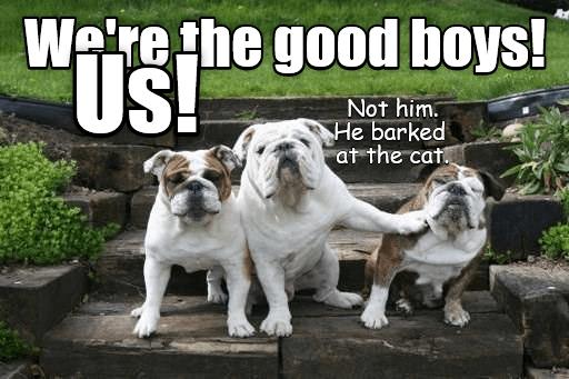 Who's a good boy? Who wants a treat?