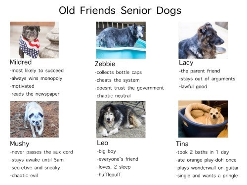Canidae - Old Friends Senior Dogs Mildred Lacy Zebbie -most likely to succeed the parent friend stays out of arguments collects bottle caps always wins monopoly -cheats the system motivated lawful good -doesnt trust the government -reads the newspaper chaotic neutral Leo Mushy -never passes the aux cord Tina -big boy -took 2 baths in 1 day -everyone's friend -stays awake until 5am -ate orange play-doh once -loves, 2 sleep -secretive and sneaky -plays wonderwall on guitar -hufflepuff -chaotic evi