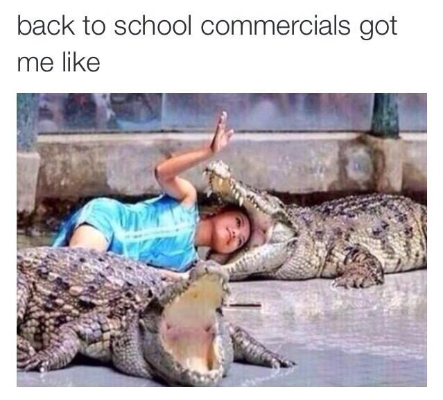 alligator school image - 8982548992