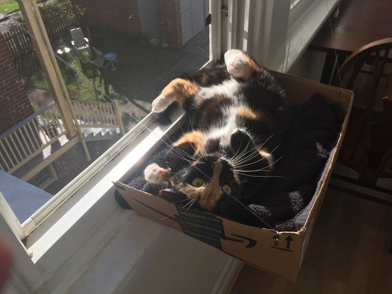 box,Cats,window