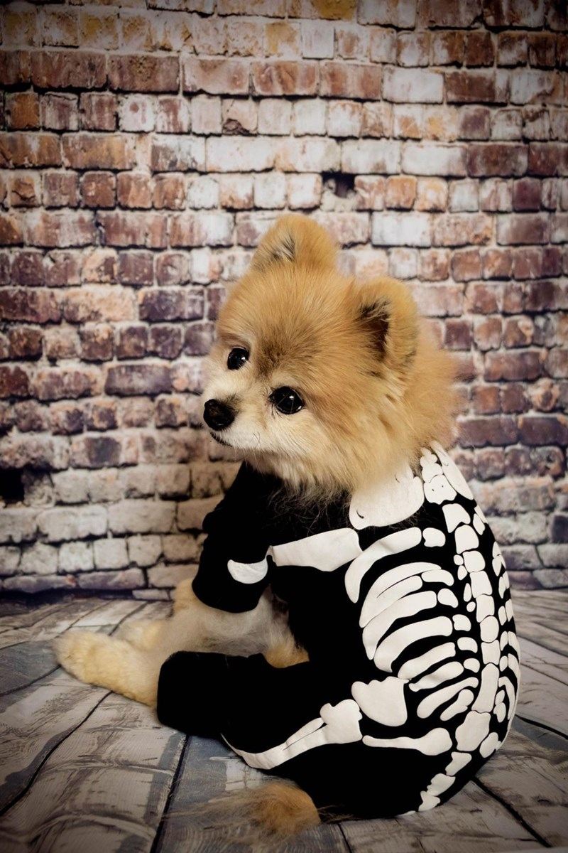 costume,dogs,skeleton