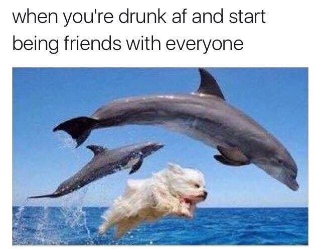 drinking dogs dolphin image - 8982802432