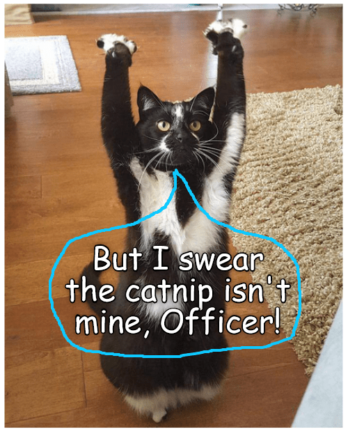 cat officer catnip mine not caption - 8982847232