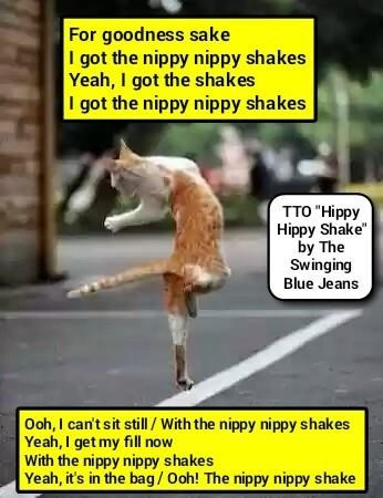 """How Kitty Gets The Shakes"" (TTO ""Hippy Hippy Shake"" by The Swinging Blue Jeans)"