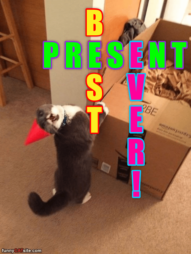 cat best present ever caption - 8982949888