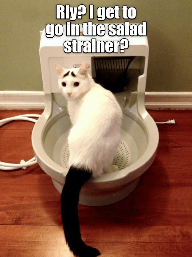 in cat go strainer caption salad - 8983387904