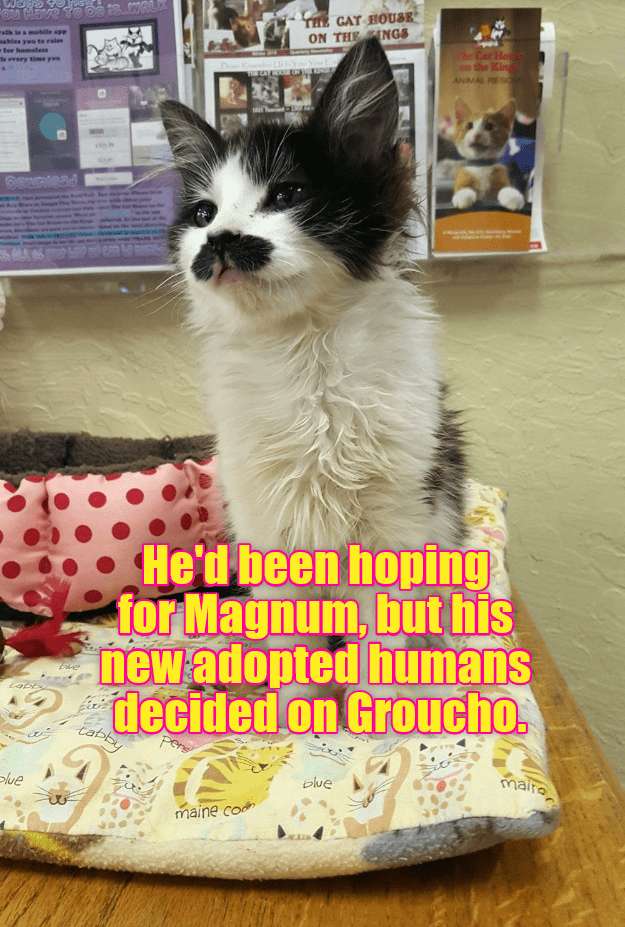magnum,hoping,groucho,kitten,humans,caption,decided