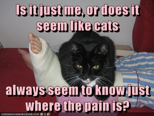 know cat is pain seem where caption