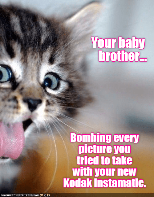 kodak,baby,brother,kitten,bombing,picture,caption