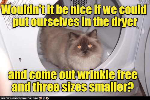 ourselves cat dryer put nice wrinkle smaller free - 8983461120