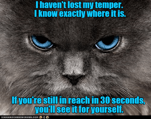 cat,yourself,see,havent,caption,temper,lost
