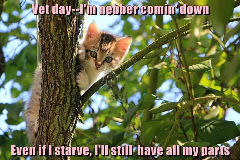 cat,starve,down,never,vet,day,caption,body parts,coming