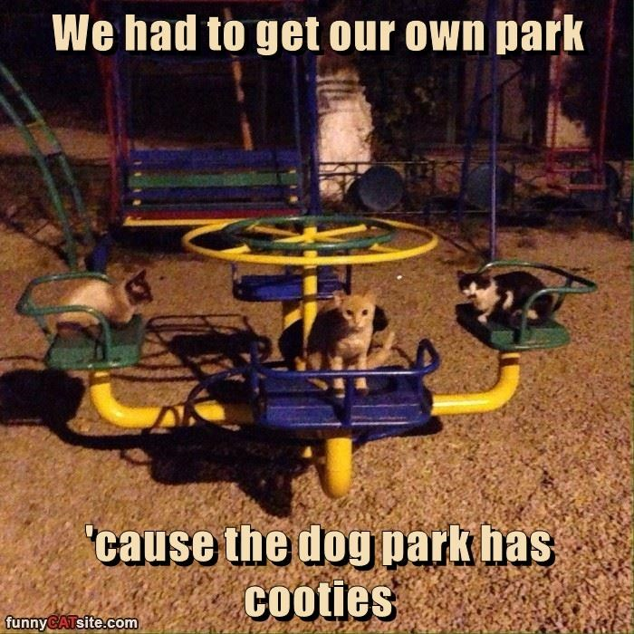 We had to get our own park  'cause the dog park has cooties