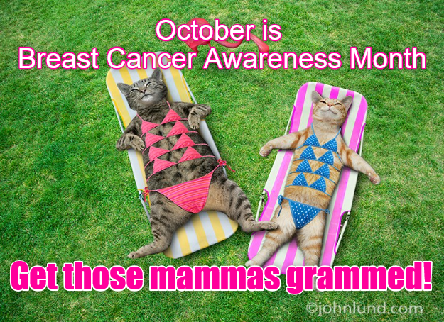 awareness month mammogram Breast Cancer caption Cats - 8983640064