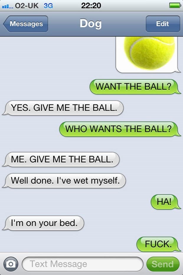 Text - O2-UK 3G 22:20 Dog Messages Edit WANT THE BALL? YES. GIVE ME THE BALL WHO WANTS THE BALL? ME. GIVE ME THE BALL Well done. I've wet myself. HA! I'm on your bed. FUCK. Text Message Send