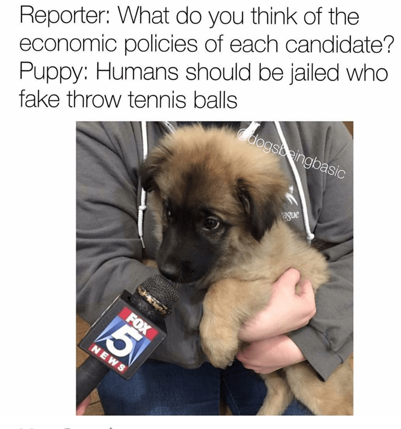 dogs Memes - 8983674368
