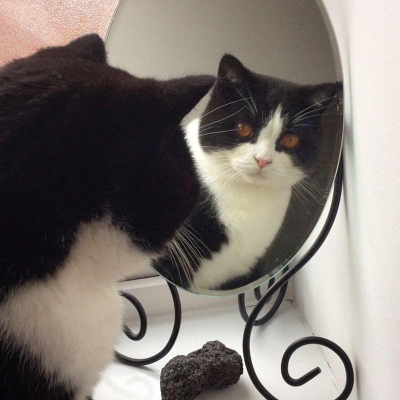 mirror,Cats