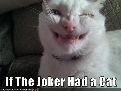 cat if joker had caption - 8983691264