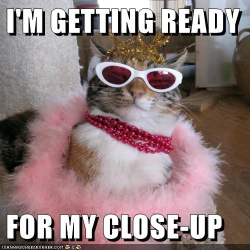 i'm getting ready for my close up lolcats lol cat memes