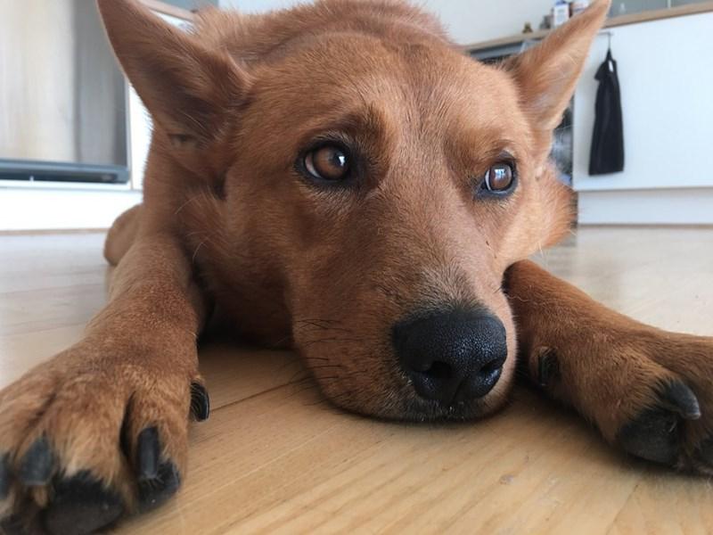 Sad dogs - 8983756544