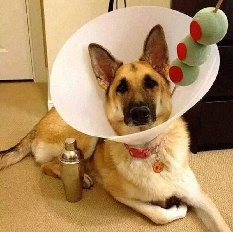 dogs martini halloween cone of shame - 8983757824