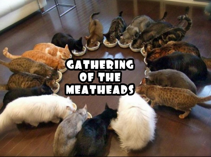meatheads,cat,gathering,caption