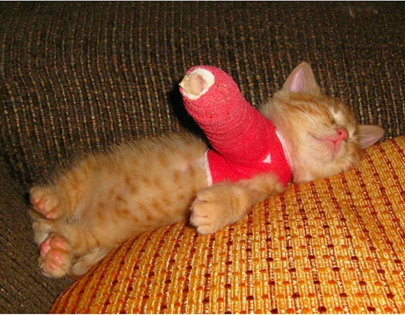 borked,cast,kitten