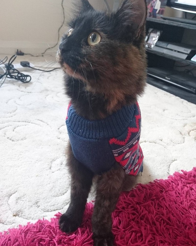 Cats sweater - 8983956480