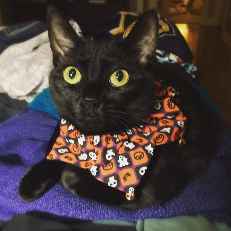 Cats halloween - 8983956992