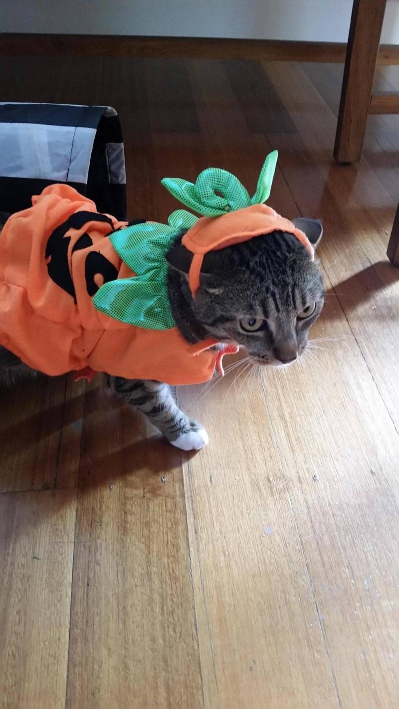 Cats costume halloween - 8983957504