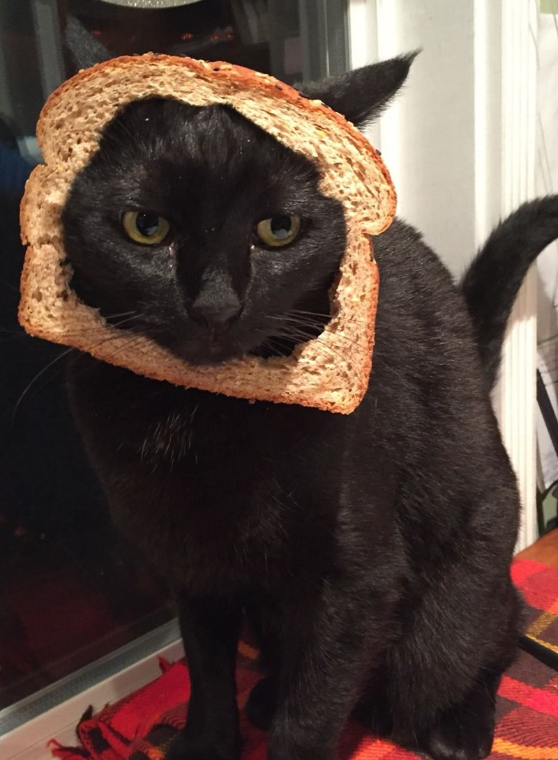 Cats,bread