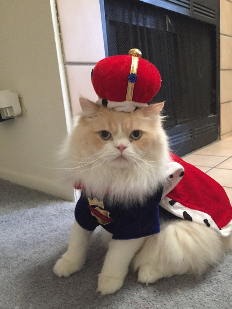 Cats,costume,king