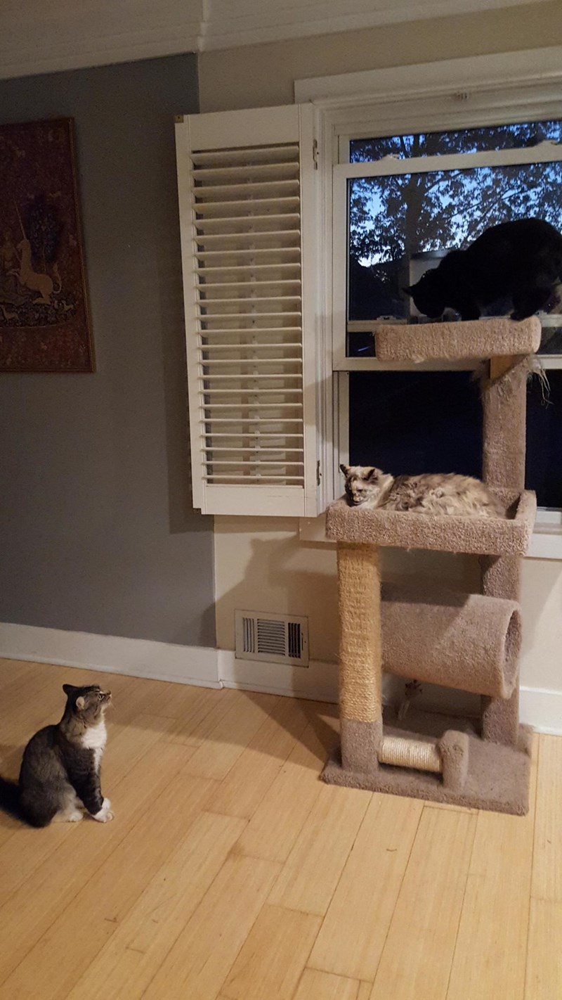 cat tree Cats stand off - 8983963392