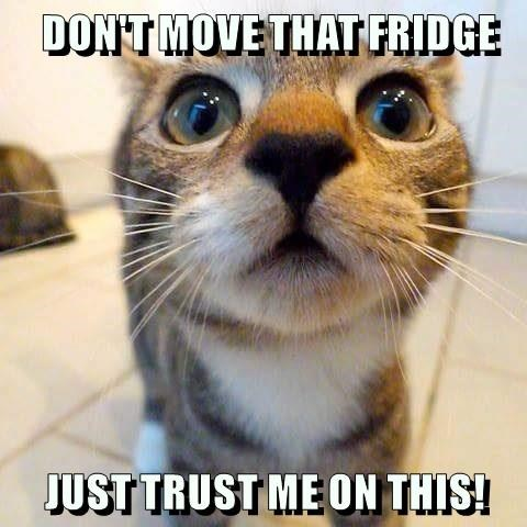 DON'T MOVE THAT FRIDGE  JUST TRUST ME ON THIS!