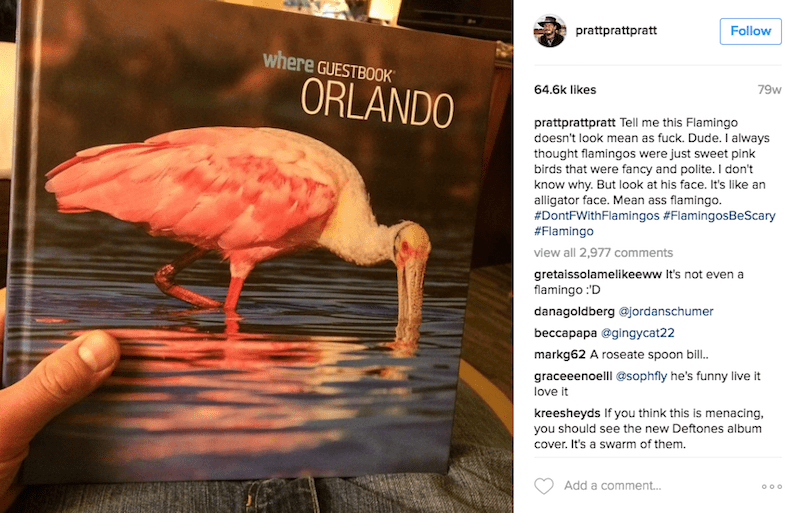 Bird - prattprattpratt Follow where GUESTBOOK ORLANDO 79w 64.6k likes prattprattpratt Tell me this Flamingo doesn't look mean as fuck. Dude. I always thought flamingos were just sweet pink birds that were fancy and polite. I don't know why. But look at his face. It's like an alligator face. Mean ass flamingo. #DontFWithFlamingos #FlamingosBeScary #Flamingo view all 2,977 comments gretaissolamelikeeww It's not even a flamingo D danagoldberg @jordanschumer beccapapa @gingусat22 markg62 A roseate s