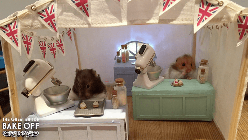 the great british bake off with hamsters