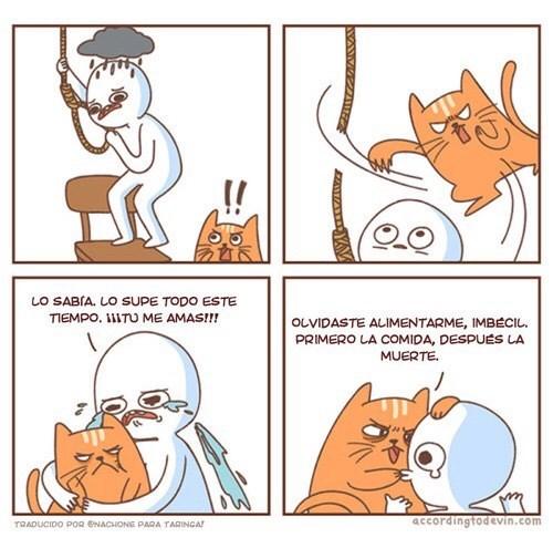 gatos bromas viñetas animales - 8984124416