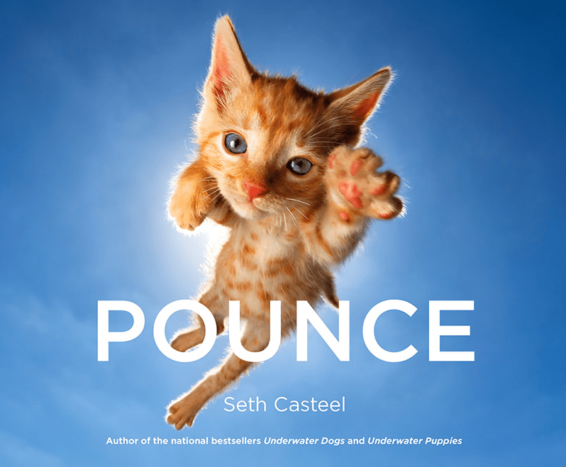 kittens - Cat - POUNCE Seth Casteel Author of the national bestsellers Underwater Dogs and Underwater Puppies