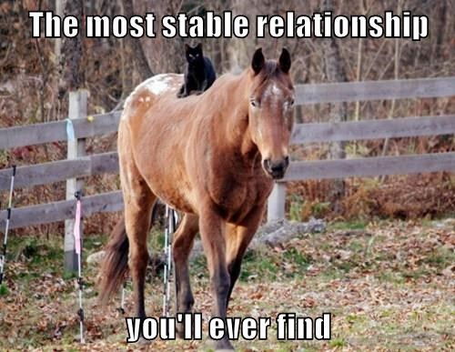 The most stable relationship  you'll ever find