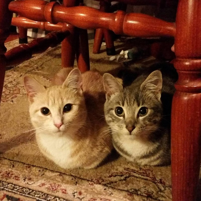 Two Loaves Please: One Light, One Dark